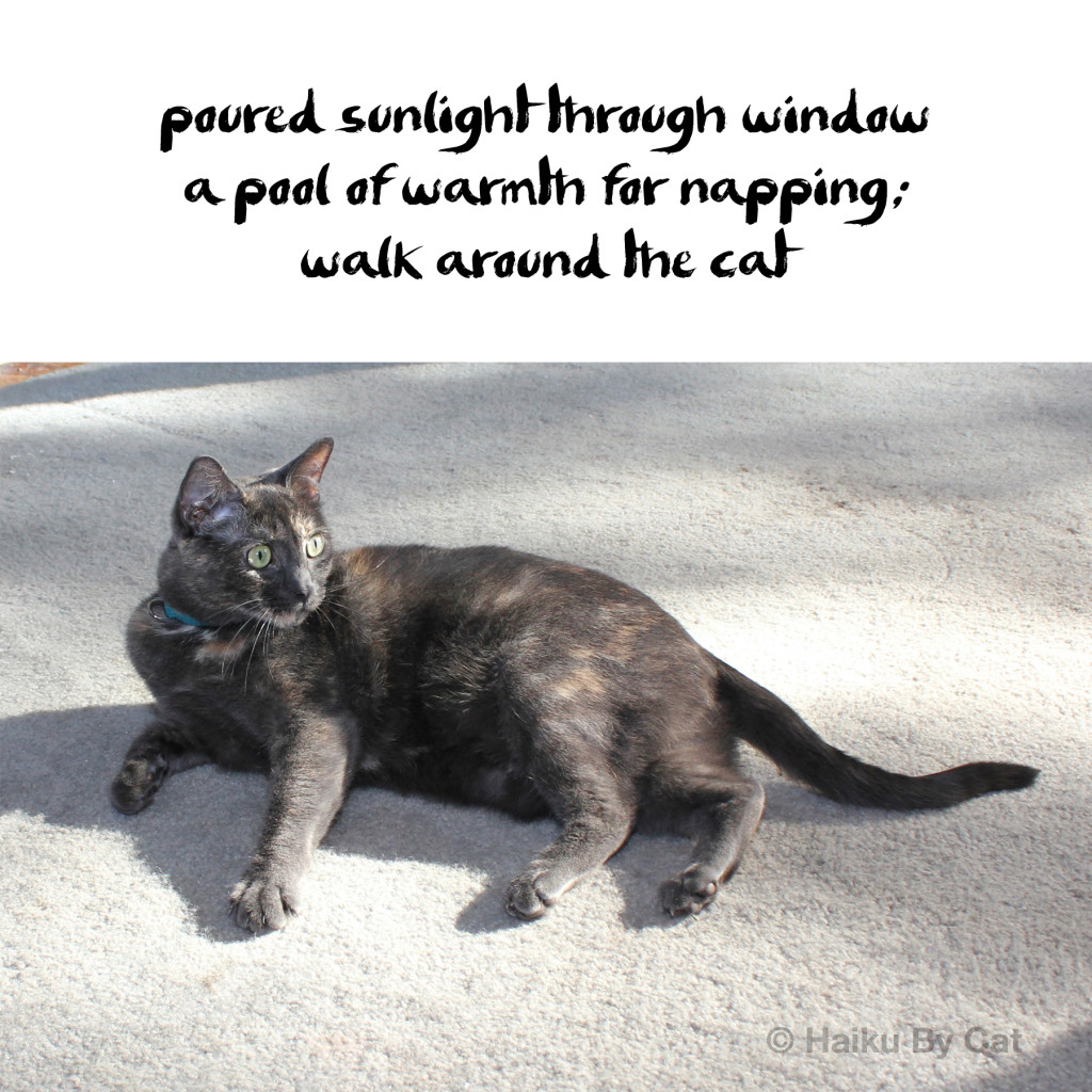 poured sunlight through window / a pool of warmth for napping /walk around the cat