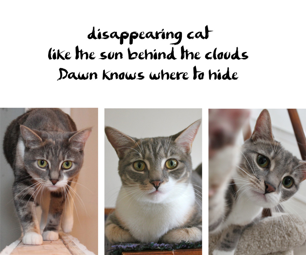 disappearing cat / like the sun behind the clouds / Dawn knows where to hide