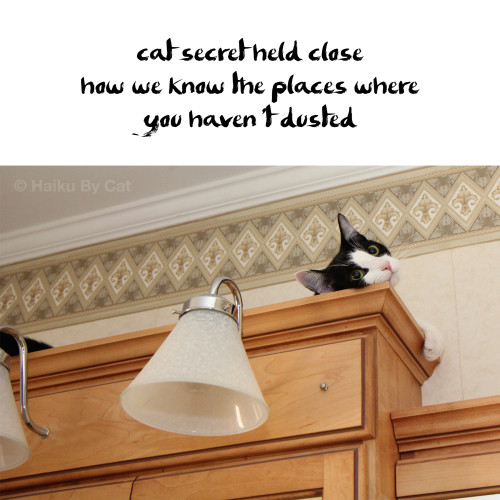 cat secret held close / how we find the places where / you haven't dusted