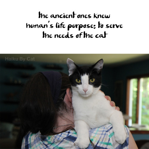 Haiku by cat: the ancient ones knew / human's life purpose: to serve / the needs of the cat