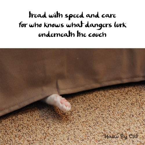 haiku by cat : tread with speed and care / for who knows what dangers lurk / underneath the couch