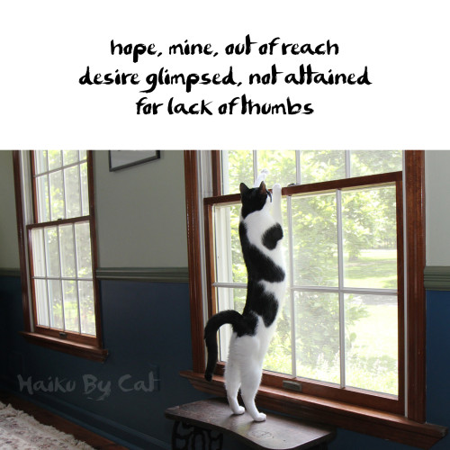 haiku by cat: hope, mine out of reach / desire glimpsed, not attained / for lack of thumbs