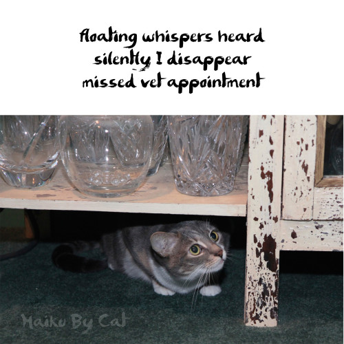 Haiku by Cat: floating whispers heard / silently I disappear / missed vet appointment
