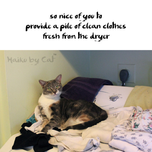 Haiku by Cat: so nice of you to / provide a pile of clean clothes / fresh from the dryer