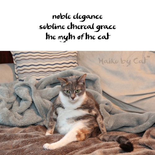 Haiku by Cat: noble elegance / sublime ethereal grace / the myth of the cat