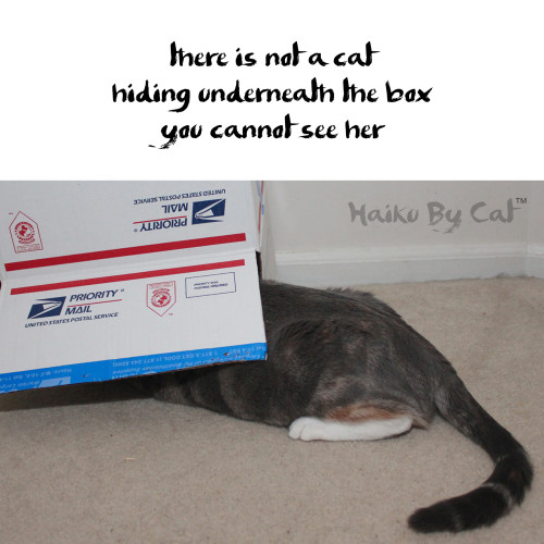 Haiku by Cat: there is not a cat / hiding underneath the box  / you cannot see her