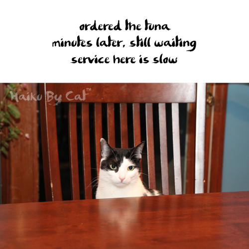 Haiku by Cat: ordered the tuna / minutes later, still waiting / service here is slow