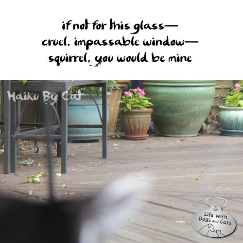 Haiku by Cat: if not for this glass--cruel, impassable window--squirrel, you would be mine