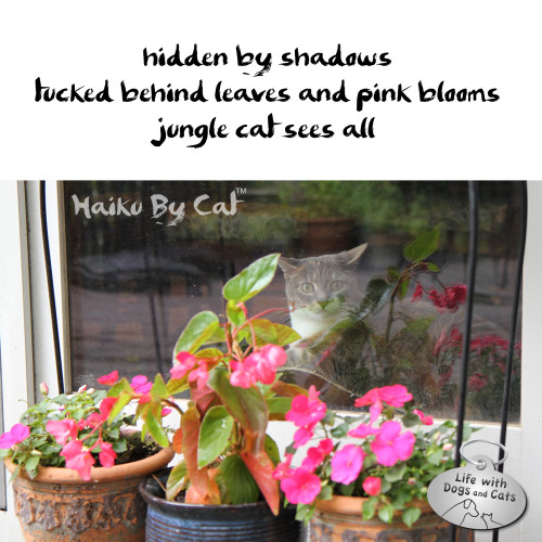 Haiku by Cat: hidden by shadows tucked behind leaves and pink blooms jungle cat sees all