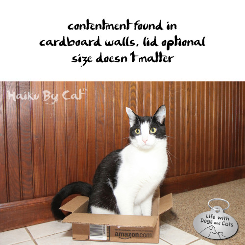 Haiku by Cat: contentment found in / cardboard walls, lid optional / size doesn't matter