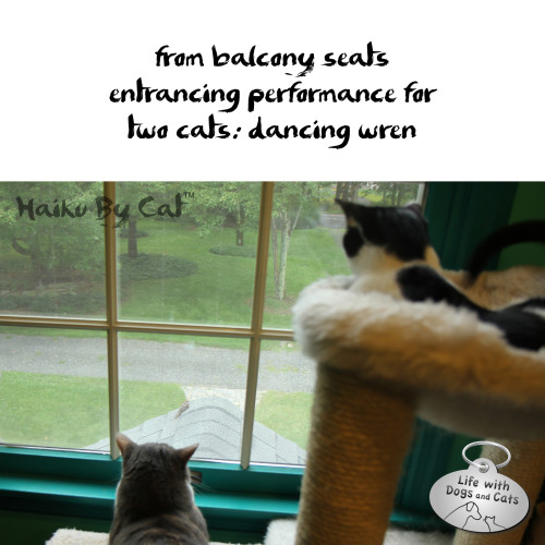 Haiku by Cat: from balcony seats / entrancing performance for / two cats: dancing wren