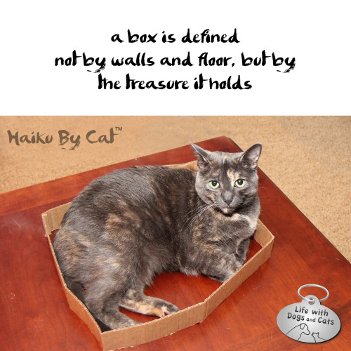 Haiku by Cat: a box is defined / not by walls and floor, but by  the treasure it holds