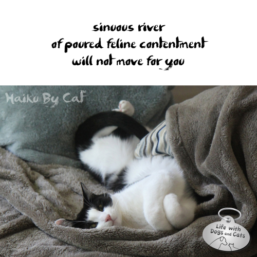 Haiku by Cat: sinuous river / or poured feline contentment / will not move for you