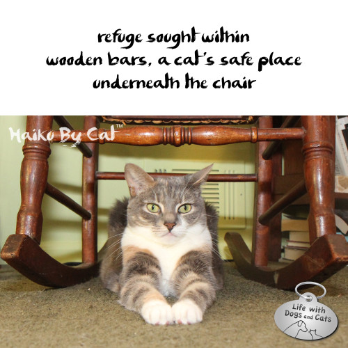 Haiku by Cat: refuge sought within / wooden bars, a cat's safe place / underneath the chair