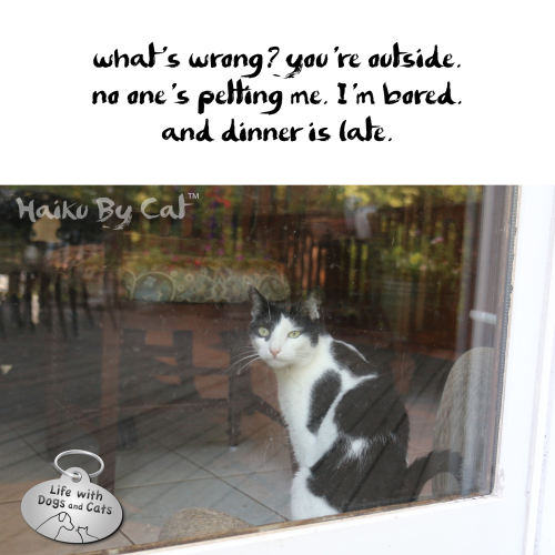 Haiku by Cat: what's wrong?  you're outside. / no one's petting me. I'm bored / and dinner is late.