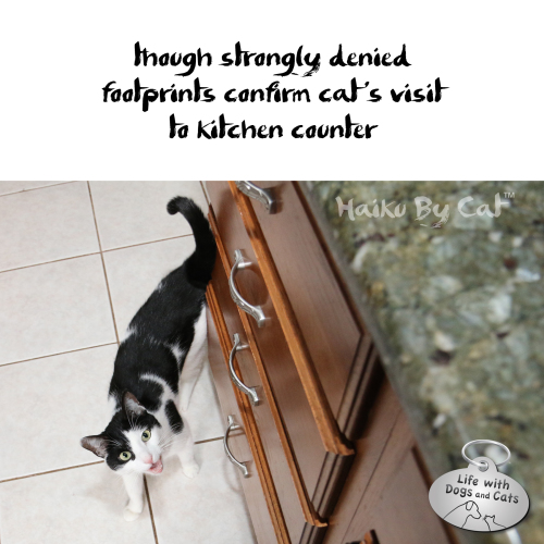 Haiku by Cat though strongly denied / footprints confirm cat's visit / to kitchen counter