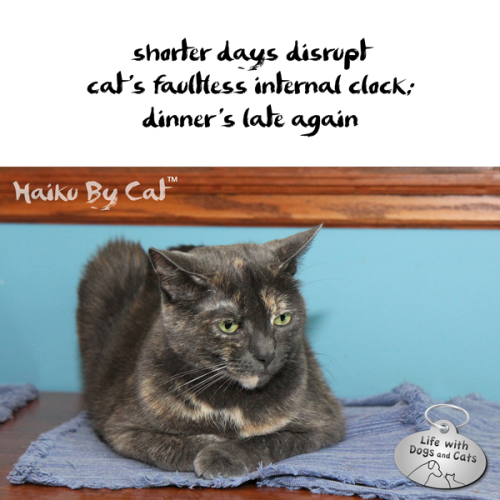 Haiku by Cat: shorter days disrupt / cat's faultless internal clock / dinner's late again