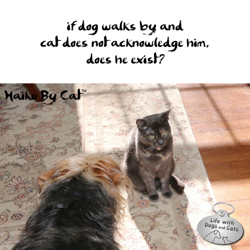 Haiku by Cat: if dog walks by and / cat doesn't acknowledge him / does he exist?