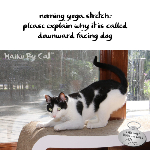 Haiku by Cat: morning yoga stretch: please explain why it is called / downward facing dog