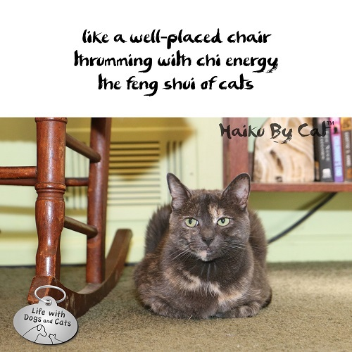 Haiku By Cat: like a well-placed chair / thrumming with chi energy / the feng shui of cats