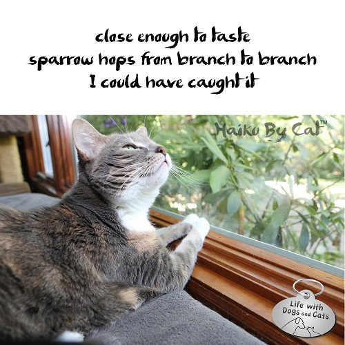 Haiku by Cat: close enough to taste / sparrow hops from branch to branch / I could have caught it