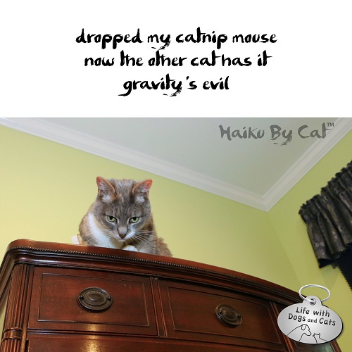 Haiku By Cat: dropped my catnip mouse / now the other cat has it / gravity's evil