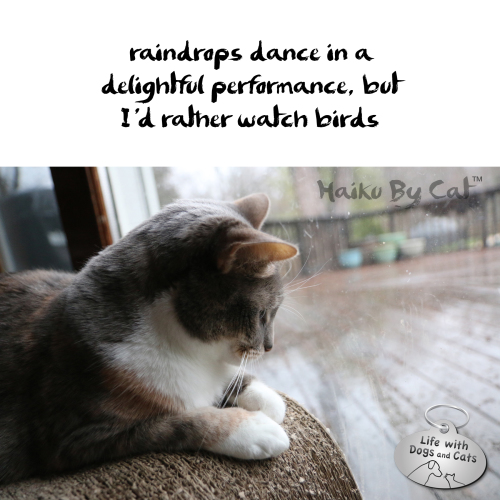 Haiku by Cat raindrops dance in a / delightful performance, but / I'd rather watch birds