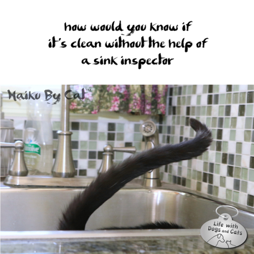 #HaikuByCat how would you know if / it's clean without the help of / a sink inspector