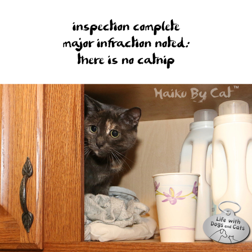 Haiku By Cat: inspection complete major infraction noted: there is no catnip