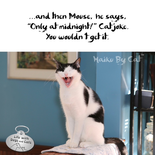 "..and then Mouse, he says, / ""Only at midnight!"" Cat joke. / You wouldn't get it #HaikuByCat"
