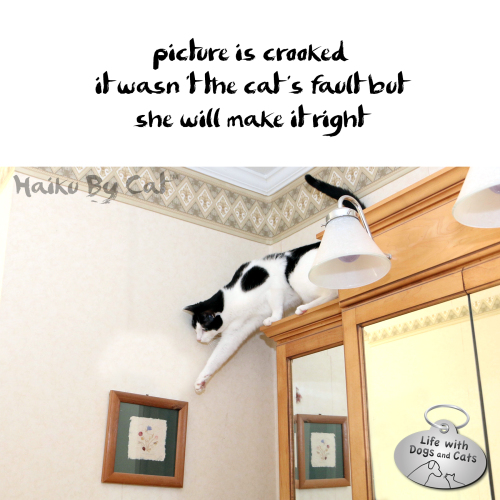 #HaikuByCat picture is crooked / it wasn't the cat's fault but / she will make it right