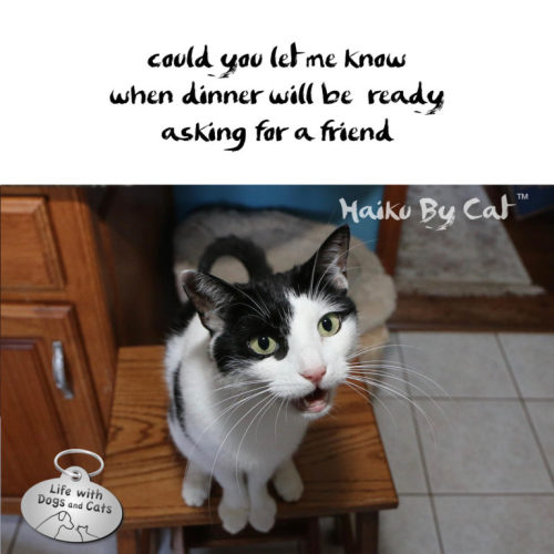 #HaikuByCat could you let me know / when dinner will be ready / asking for a friend
